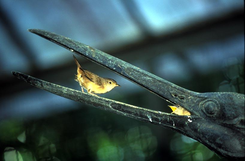 aves-do-jardim-botanico